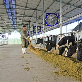 De toenemende behoefte aan melk in China heeft wereldwijd grote gevolgen