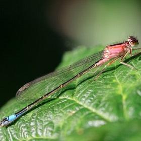 'Achteruitgang insecten in Nederland is zorgelijk,' concludeert minister op basis van Wagenings onderzoek